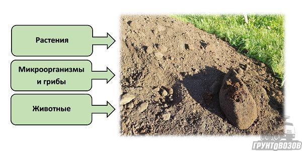 Группы организмов, активно влияющие на процесс формирования почвы