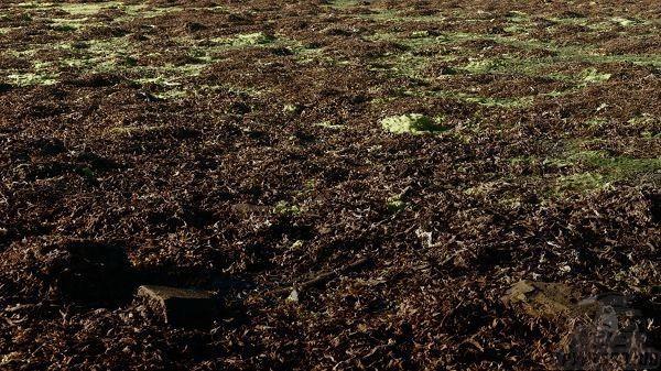 В зрелой почве встречаются многоклеточные водоросли, нити которых покрывают поверхность