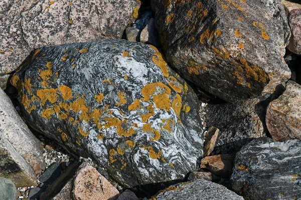 Лишайники поселяются прямо на камнях